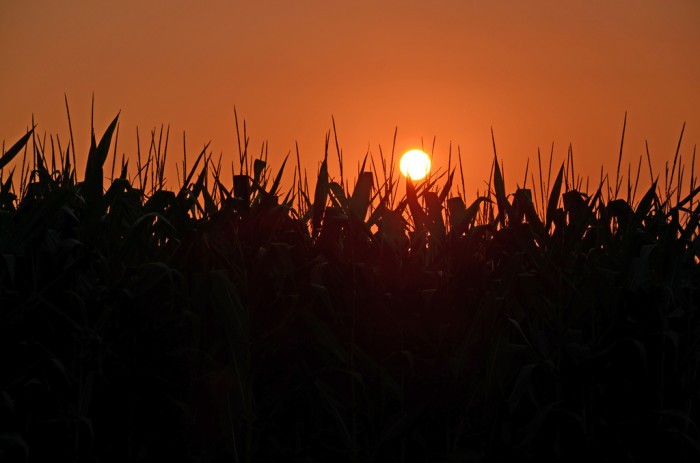 11) A Glowing July Sky Over a Cornfield