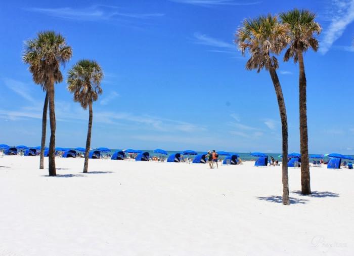 14. Palm Trees