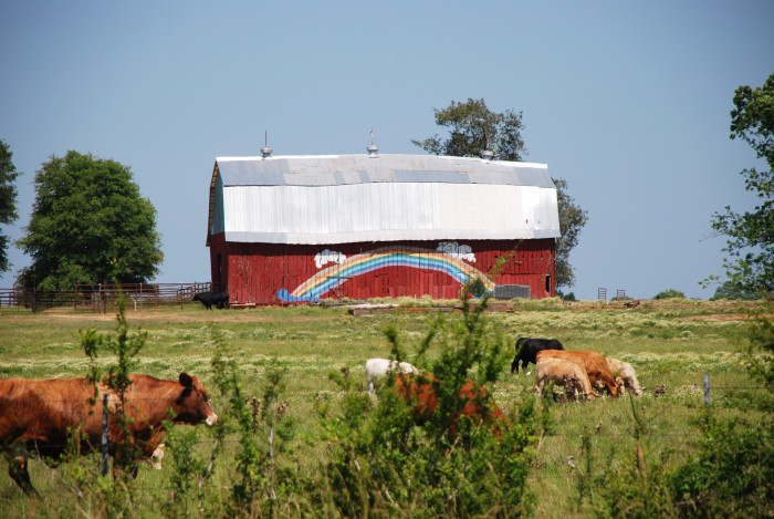 11. The combination of the barn and the cows definitely creates a vivid scene.