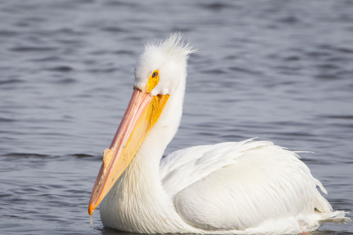 10. This pelican out for a nice float