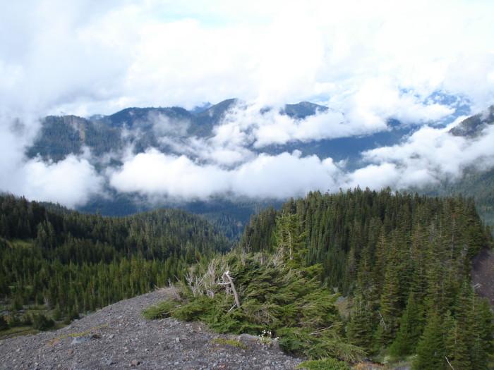 8. Heliotrope Ridge