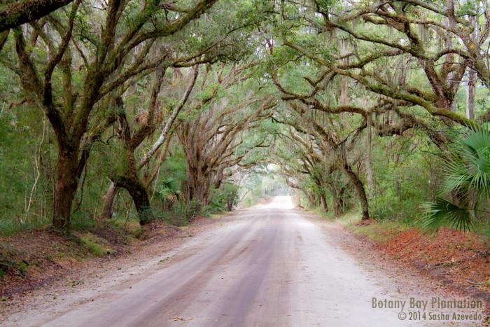 16. Botany Bay, Edisto Island, SC
