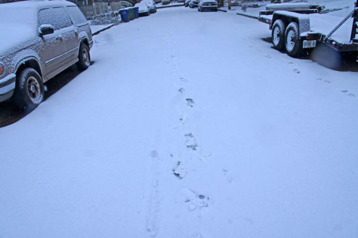5) Snowpocalypse