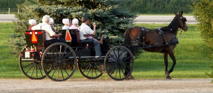 7. Amish culture, concentrated throughout central PA