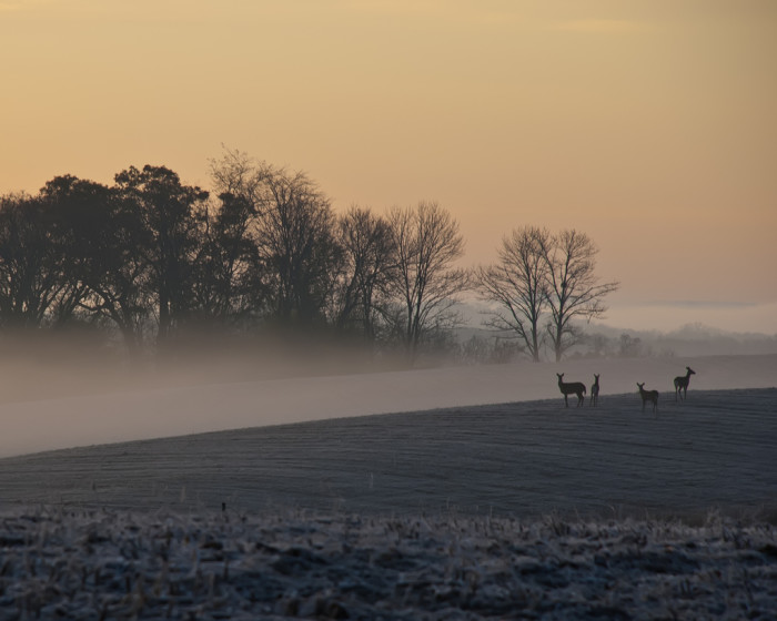12. These deer enjoying the rolling morning fog in Mount Vernon