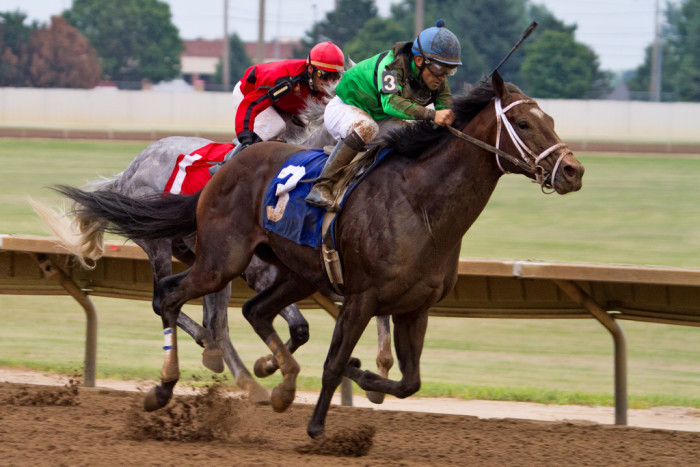 11. Pick your winner at the Prairie Meadows horse races.