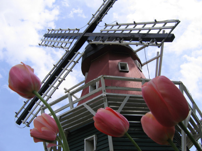12. Dutch city of Pella with their windmills.