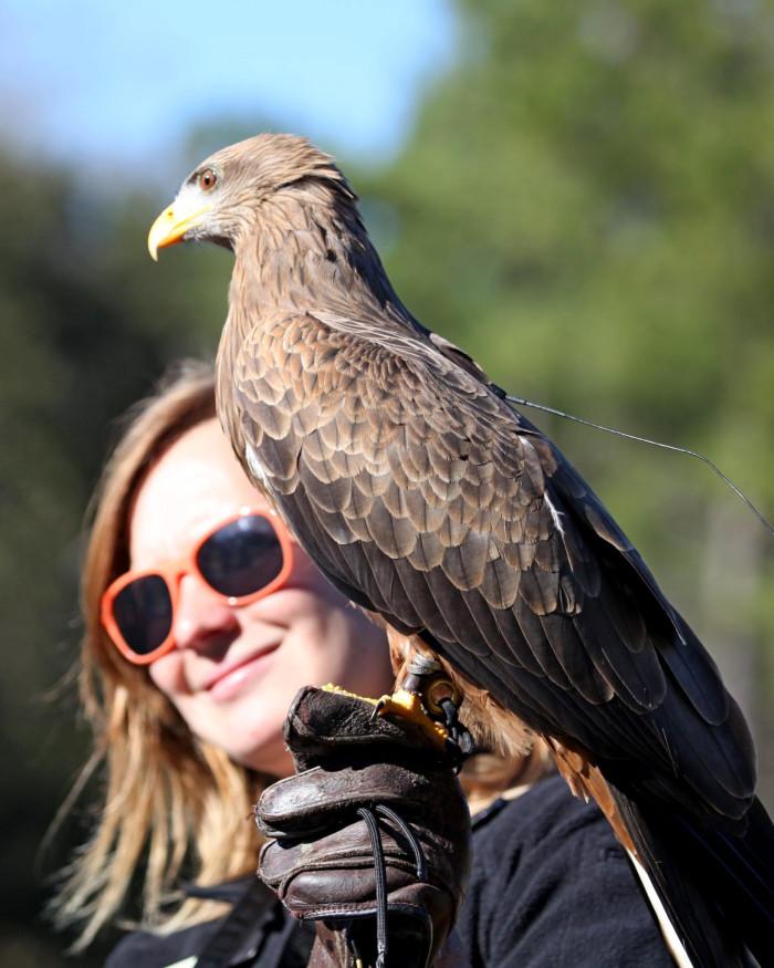 20. Center for Birds of Prey, Awendaw, SC