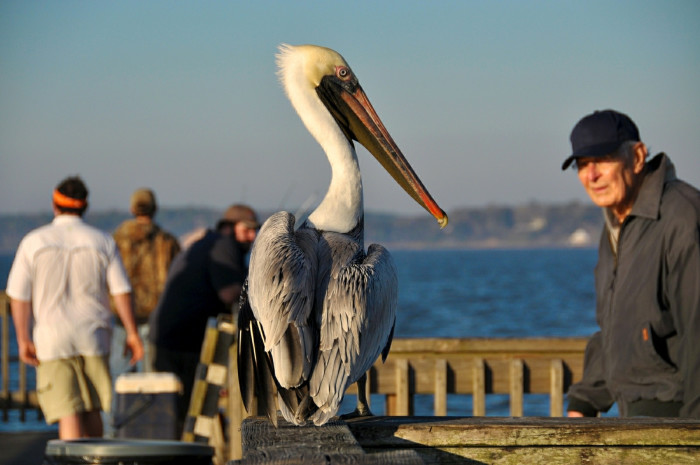 17. And you might even become pals with a pelican before the trip is over.
