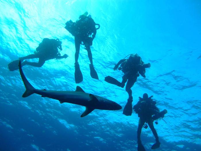 3. Sharks