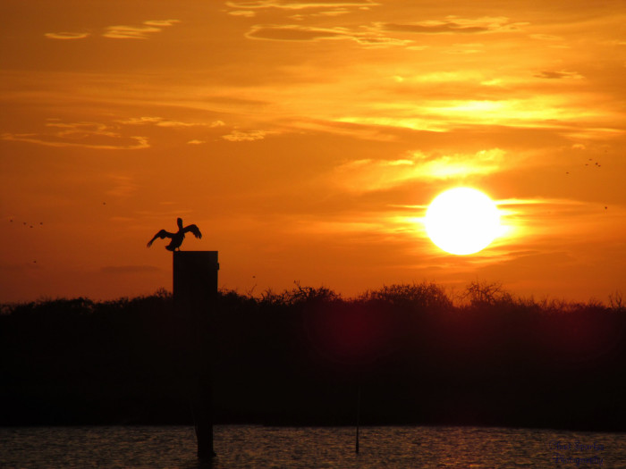 1) A pelican watching this gorgeous sunset in Sargent, Texas.