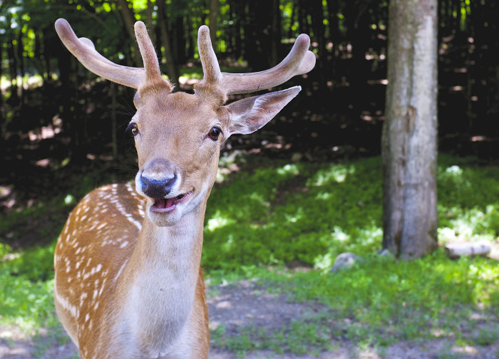7) A deer might jump in front of your car.