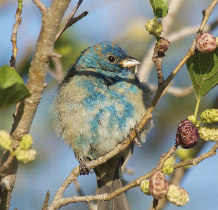 3. Grand Isle Birding Trail, Grand Isle, LA