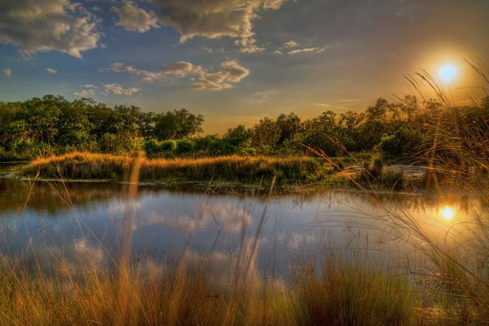 3. Neal Preserve Pond, Bradenton