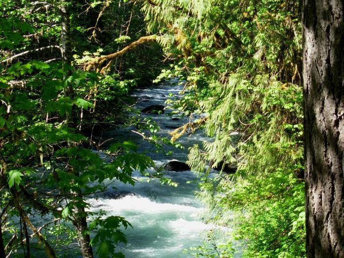 12. Duckabush River Trail