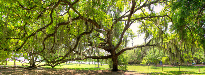 10. Our Incredible Trees