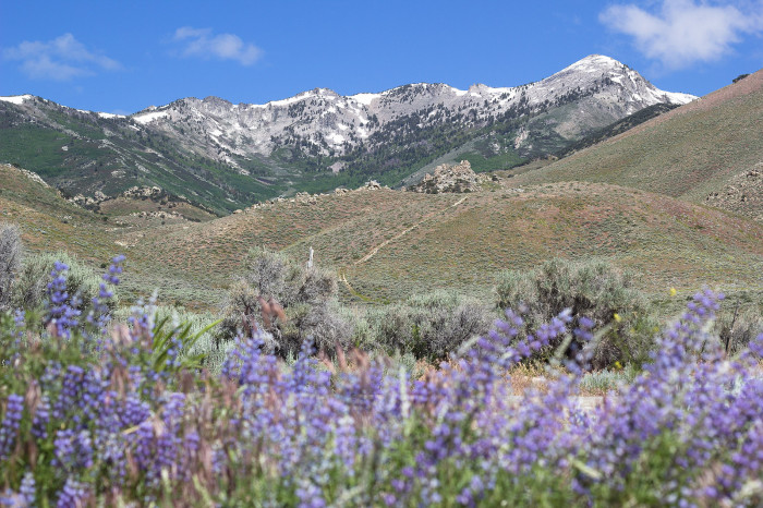 8. Ruby Mountains - Elko County, Nevada