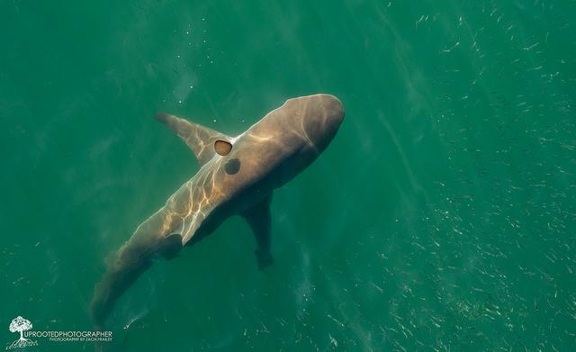 2. 'Shark + Jellyfish | Emerald Isle, NC|' by Zach Frailey