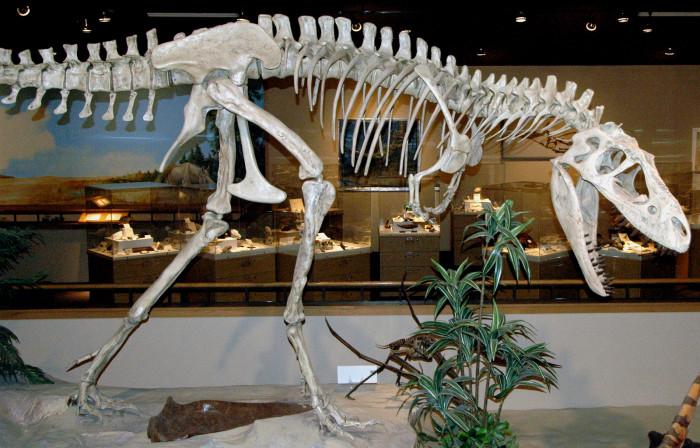 2. Dakota Dinosaur Museum - Dickinson, ND