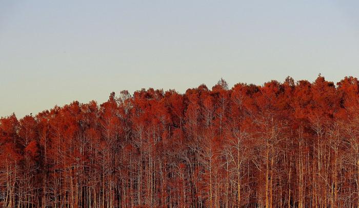 25. Autumn in Orange Hill, FL