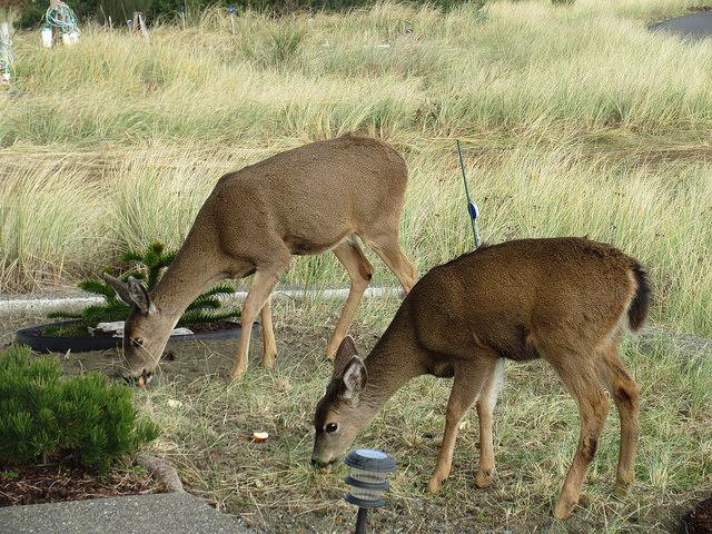 10. Oh, those deer are so cute.