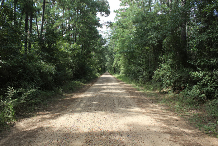 14) The towering trees and endless greenery of East Texas