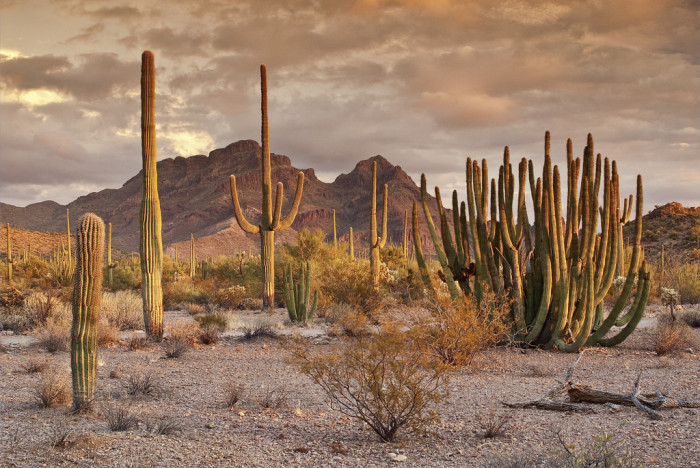 6. This view at Organ Pipe Cactus National Monument looks so peaceful.