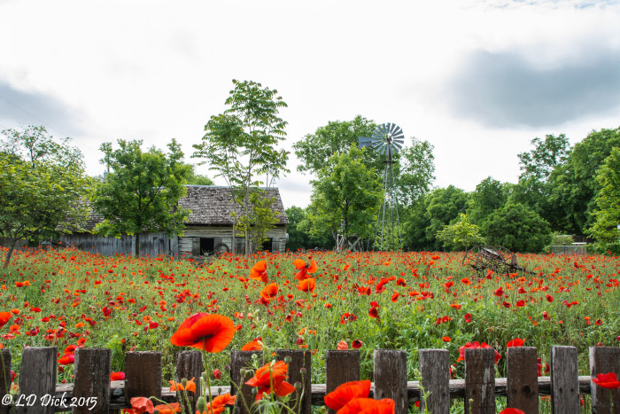 16) Poppy Field and Barn (Castroville)