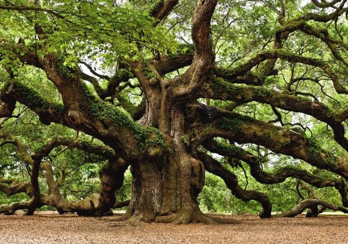 10. Angel Oak, Johns Island, SC