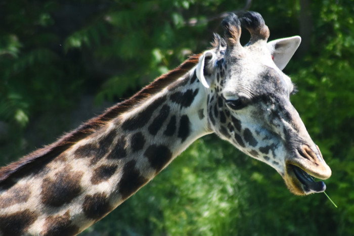 6) Cleveland Metroparks Zoo and The Rock and Roll Hall of Fame