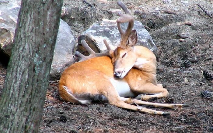 12. And so is this sleeping deer. Awww!