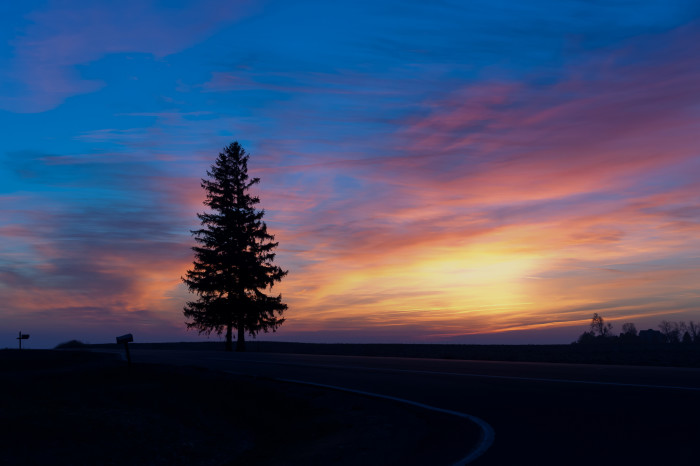 1. This gorgeous sunrise behind a lone pine tree