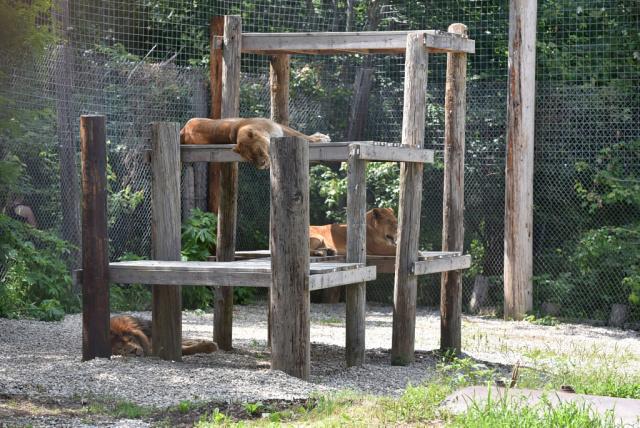 2) Exotic Feline Rescue Center (2221 E. Ashboro Road, Center Point, IN)