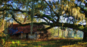You Will Fall In Love With These 13 Beautiful Old Barns In Florida