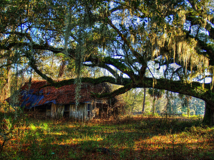 12. Dilapidated Barn in Micanopy