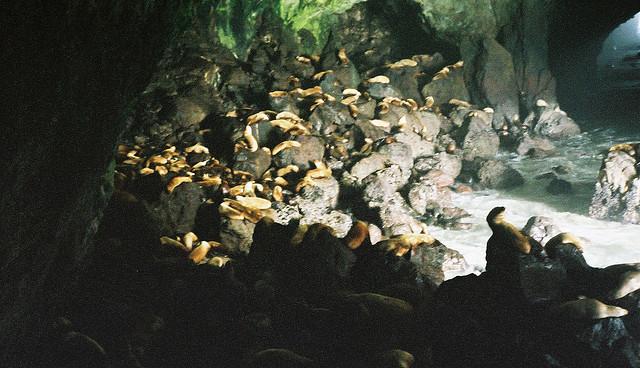 6) Sea Lion Caves