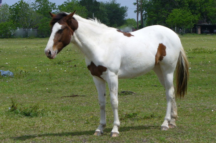 17) You may not own a horse, but you've ridden one at least once in your life.