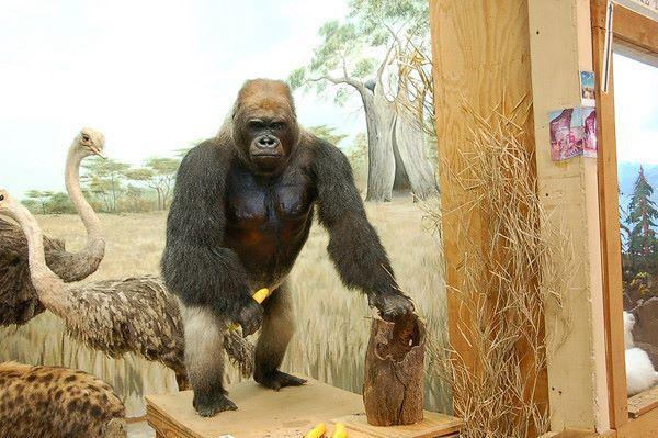 4) Touchstone Wildlife and Art Museum, Haughton, LA
