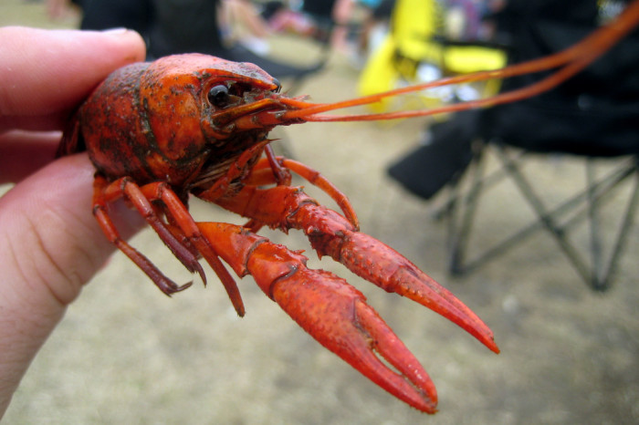 8) We introduced the country to Crawfish