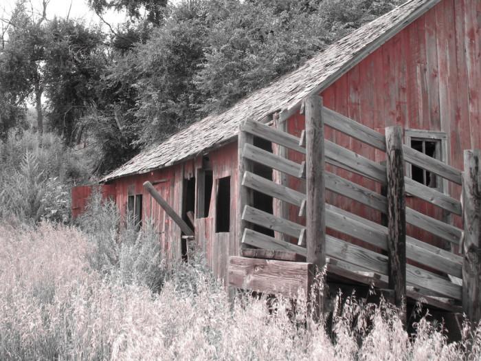 11. An Aging Barn Among Overgrown Weeds