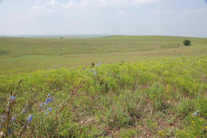 2.) Tallgrass Prairie National Preserve (Strong City)
