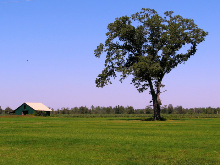 1. Green Barn Viewed from Chumuckla Highway