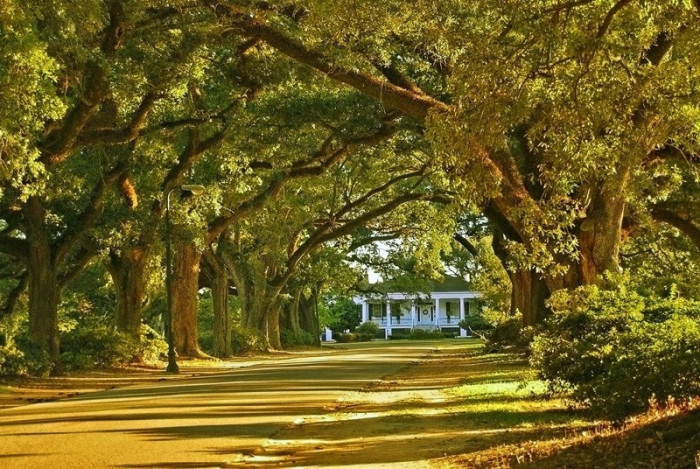 15. A beautiful sunset at the Oak Alley Plantation in Mobile, Alabama.