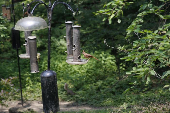 10) Cincinnati Nature Center (Milford)