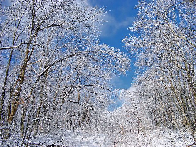 14. These ice-covered trees that almost make you forget it's summer.
