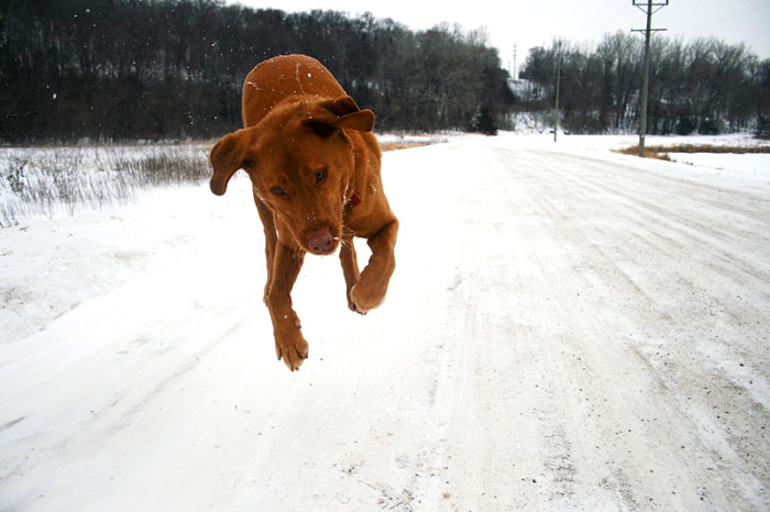 13 This airborn pup was caught frolicking in the winter. Is this not outrageously cute?!