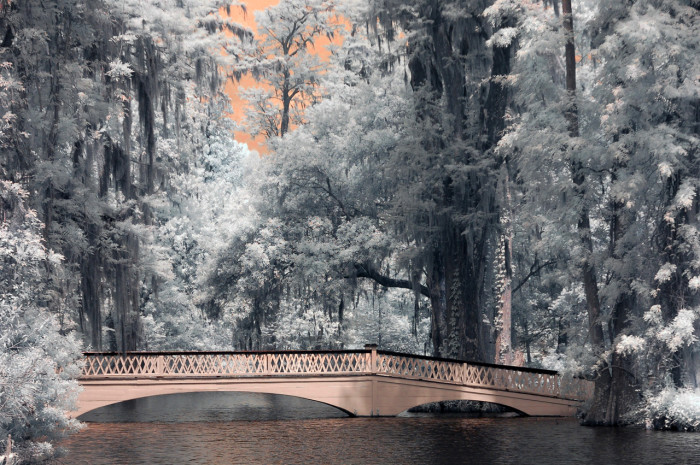 6. Looking for something old-fashioned? Something with a lot of Southern Charm? I would take her to Magnolia Plantation and Gardens. There are so many spots that could work to fulfill that dream proposal.