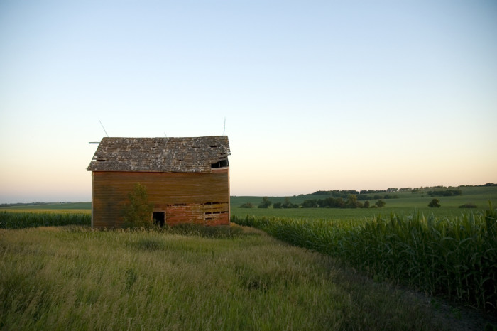 15. A Lonely Weathered Barn in a Cornfield
