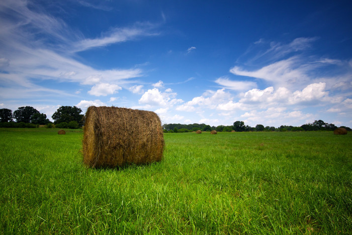 2. A picturesque hay field in New Hope, Alabama.