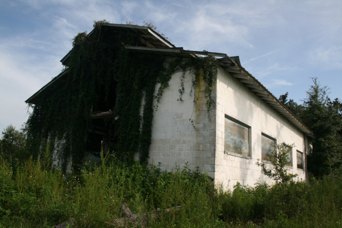 11. Vine-Covered Barn